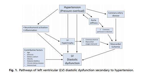 que es hipertrofia ventricular