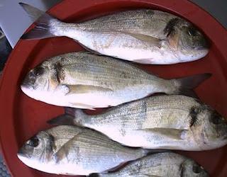 طريقة صيد سمك الدنيس