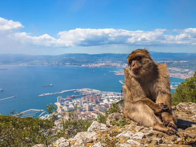 gibraltar-excursion-malagatrips