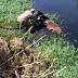 Mototaxistas e Corpo de Bombeiros resgatam Cavalo que se afogava em rio na cidade de Cajazeiras