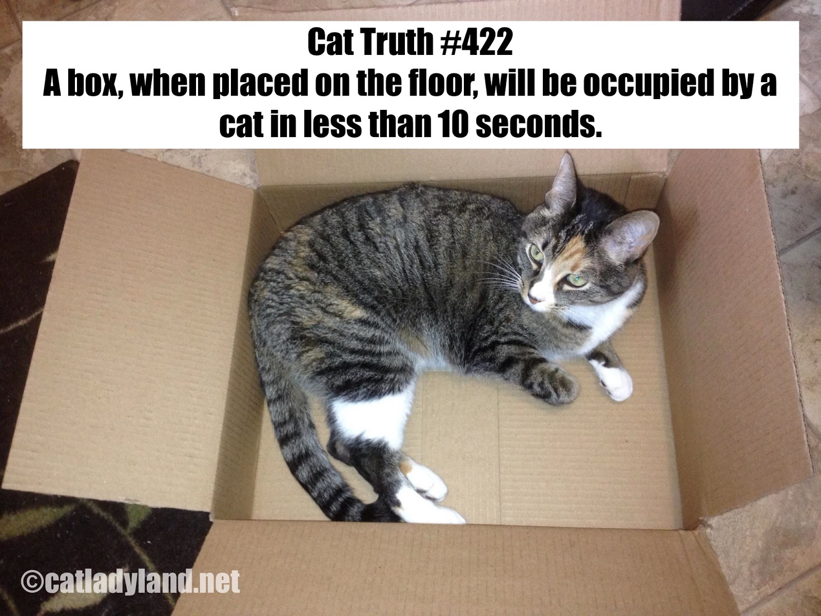 catladyland cats are funny cat truth 422 math proves cats are powerless against the box. Black Bedroom Furniture Sets. Home Design Ideas