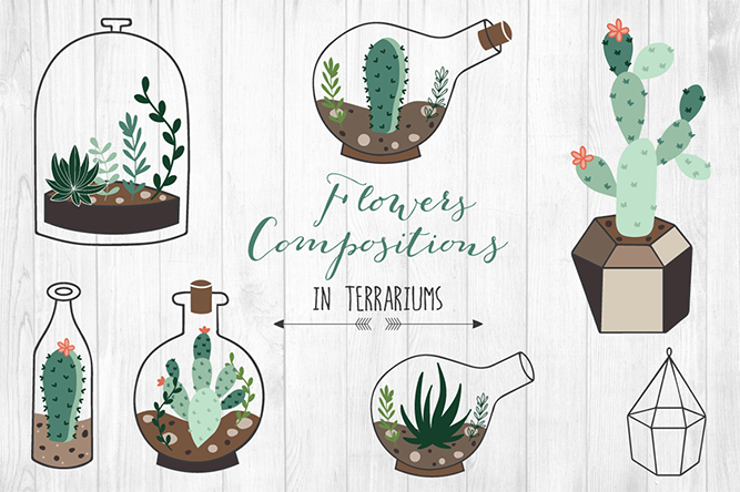 Hand drawn Succulents in Terrarium - lokko studio