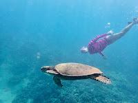 http://www.tropicallight.com/swim1/25sep16sm/25sep16sm.html
