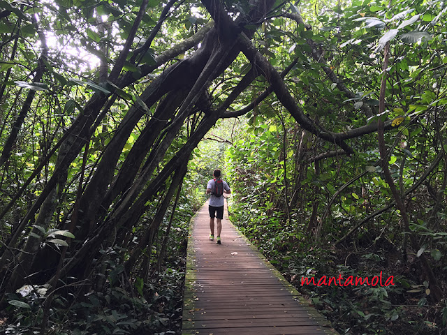 MacRitchie Boardwalk