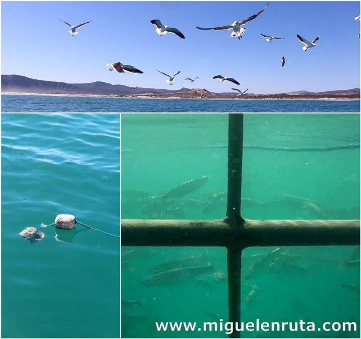 Jaula-de-tiburones-Dyer-Island