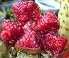 manfaat buah delima bagi ibu hami dan juga janin yang sedang dikandungnya