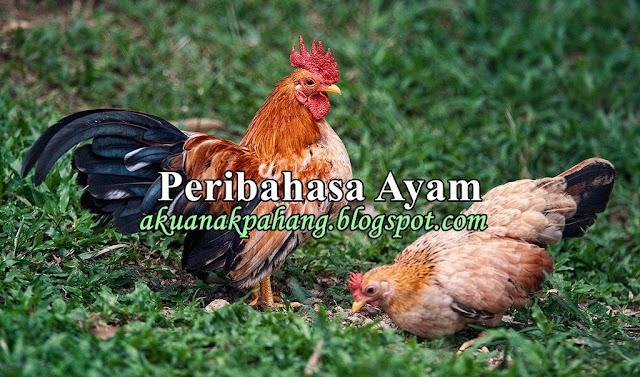 Peribahasa Ayam Apa Salah Ayam