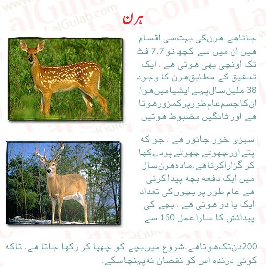 gadagari ki mazamaat essay in urdu Bangal me urdu - wafa rashidipdf  tareekh riyasat tonk gadagari taman amadipdf 07 hazrat usman ki madafiaat al waqia 51-52.