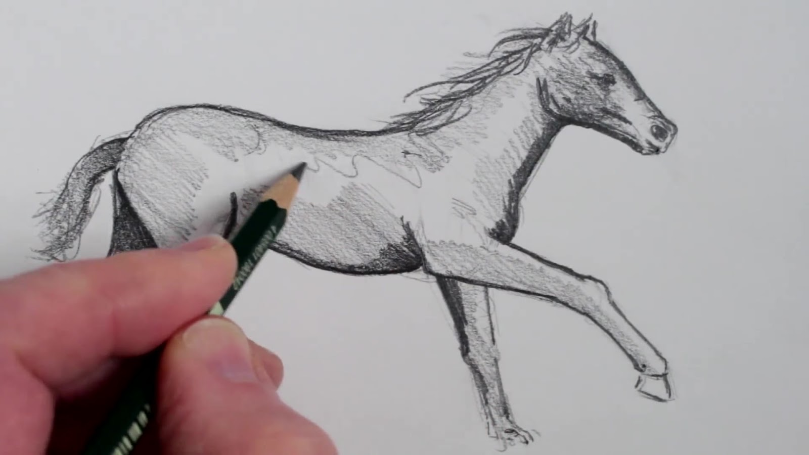 الرسم بالرصاص رسم حصان بالرصاص