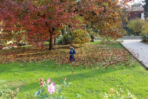 perchè le foglie cambiano colore scuola primaria