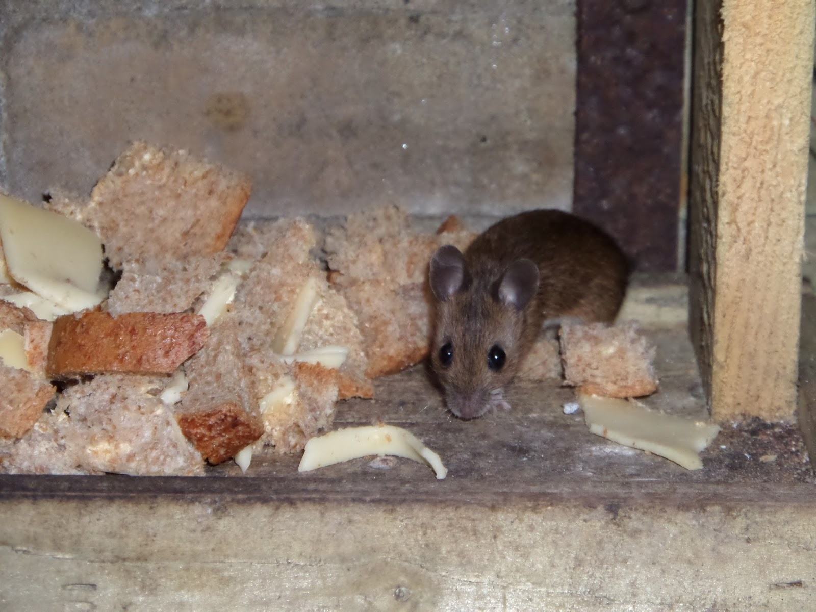 Familie Dubbelop: Een muis in het vogelhuis!