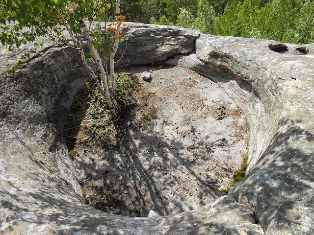 Берёзка в каменной чаше Аракульского шихана