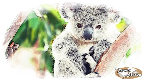 Contoh Descriptive Text Hewan Koala Artinya