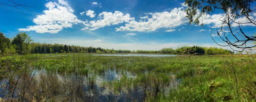 Wetlands at Plum Island in Door County WI