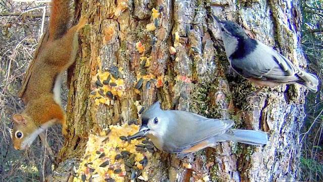 Birds and Squirrels Feeding in the Trees