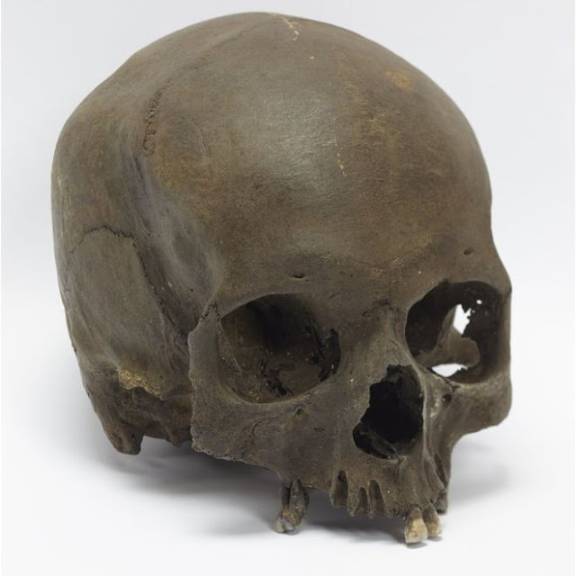 Skull found by dog walker is Iron Age woman
