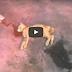 ( VIDEO ) Subhanallah.. Kucing Hampir MAti akibat Keracunan HIDUP semula Selepas Disembur GAram Bukit...