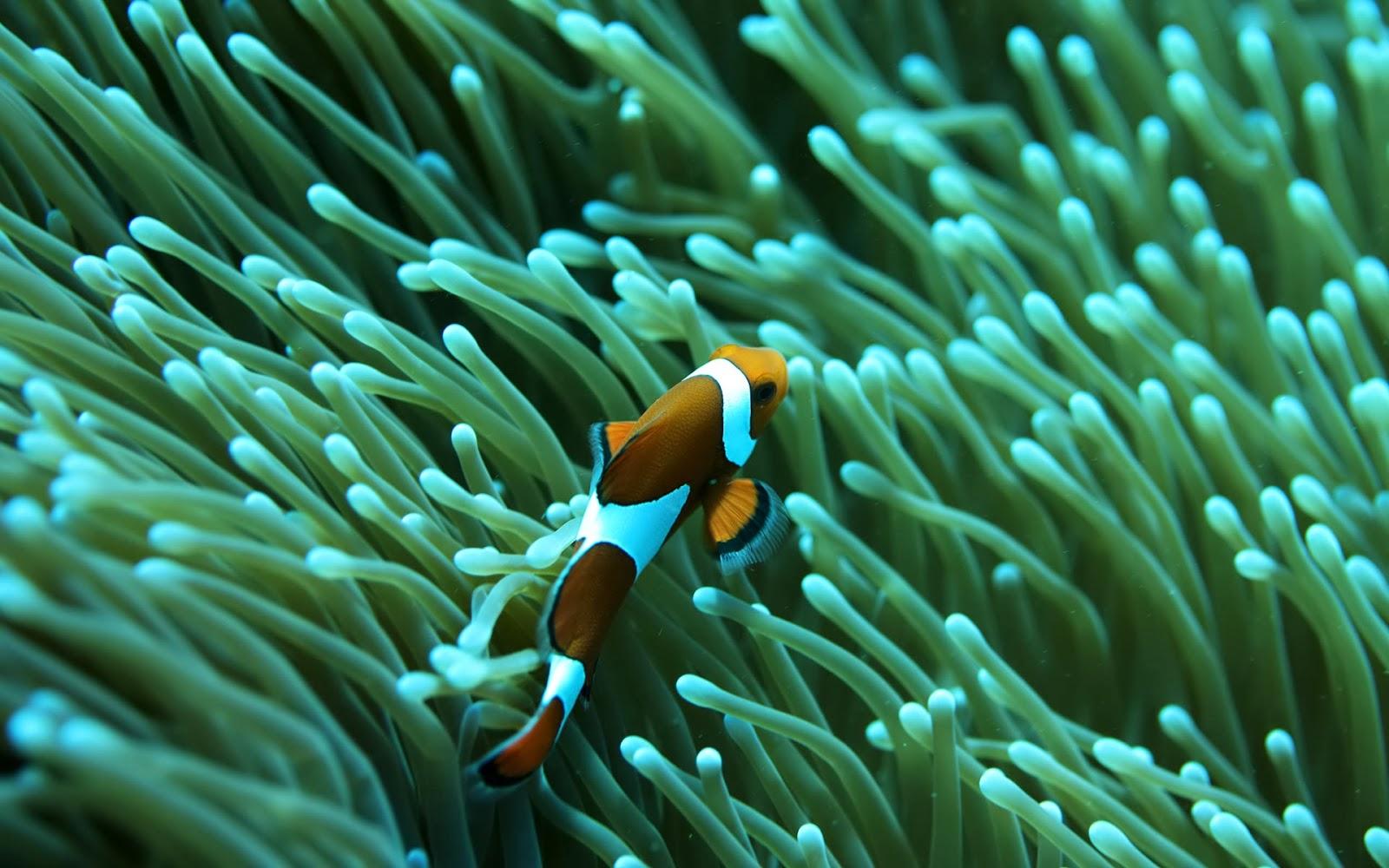 saltwater aquarium reef fish wallpaper   beautiful desktop wallpapers
