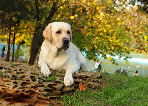Karmy Royal Canin Life Style dla psów