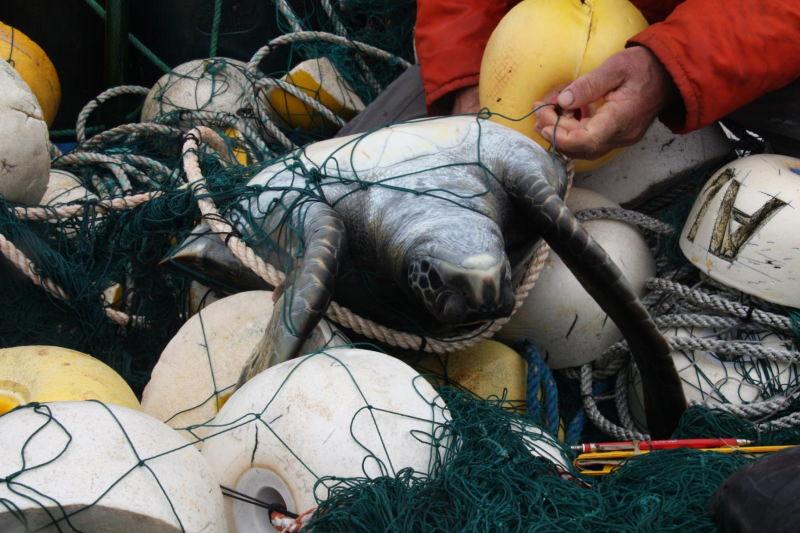 Tartaruga presa numa rede