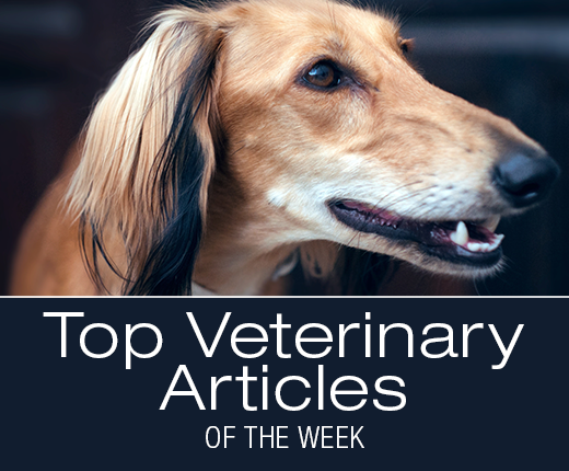Top Veterinary Articles of the Week; SAM-e for Dogs, Veterinary Specialists, and more ...