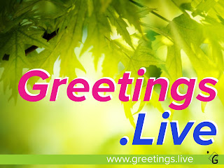 Greetings Live Natural leafs background HD image