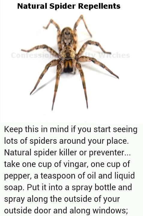 Make Your Own Natural Spider Deter