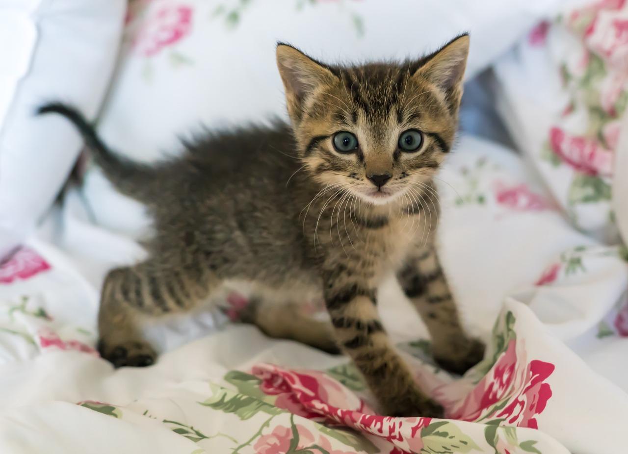 anak kucing manja
