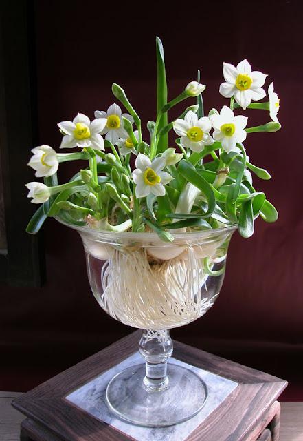 hoa thủy tiên đẹp nhất thế giới 4