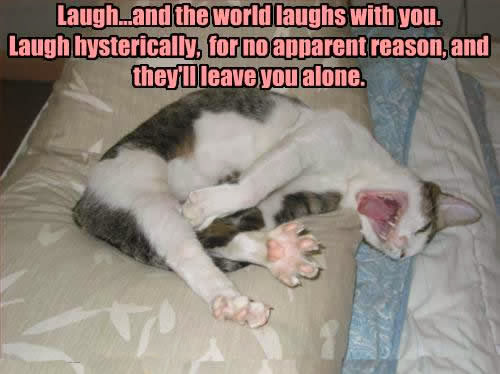 Funny cats with words mobile wallpapers - Funny animal pictures with words ...
