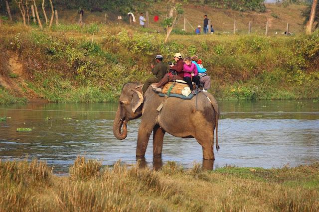 Wildlife Watching in Chitwan