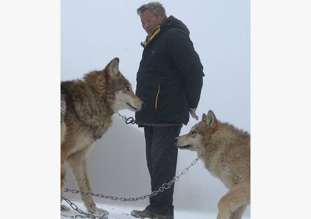 Family man raises 150 wolves in nine years