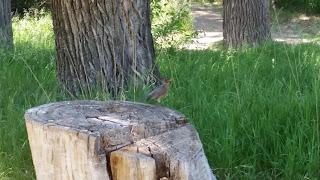 What a cute brave bird