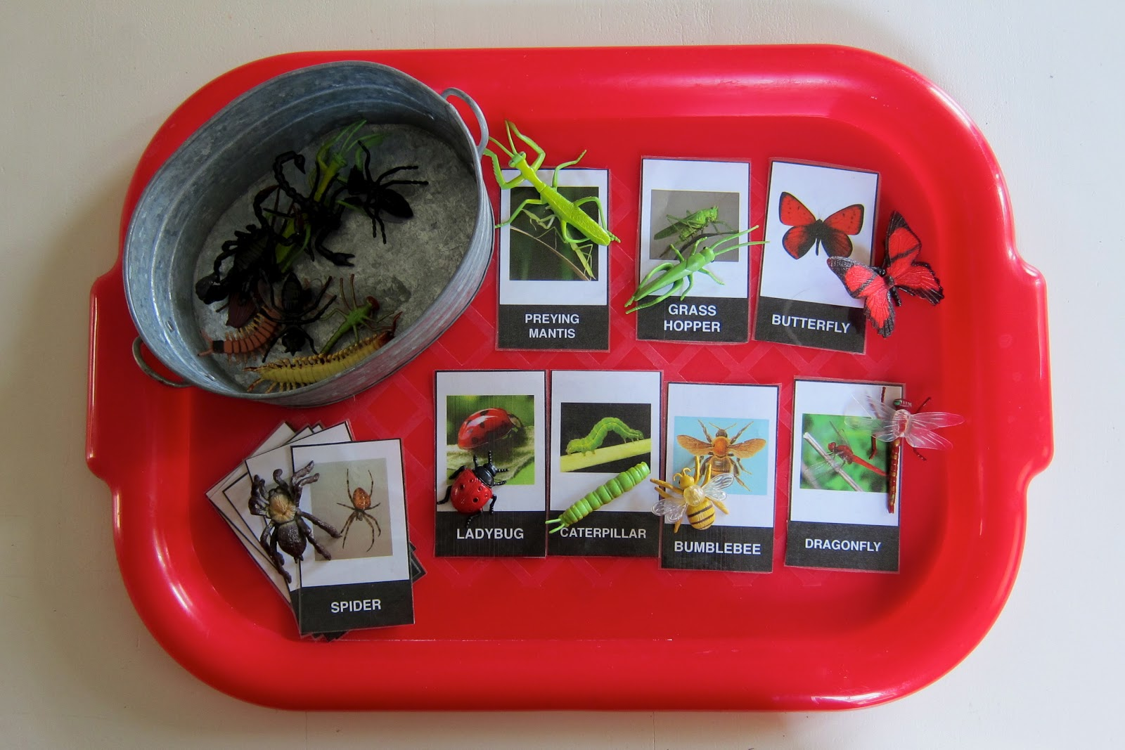 Around Our Schoolroom Insects Spiders And Other Arthropods