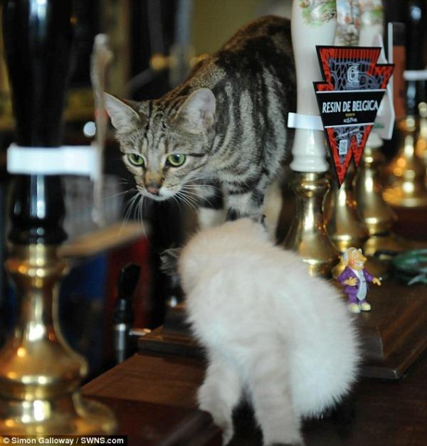 cat pub england