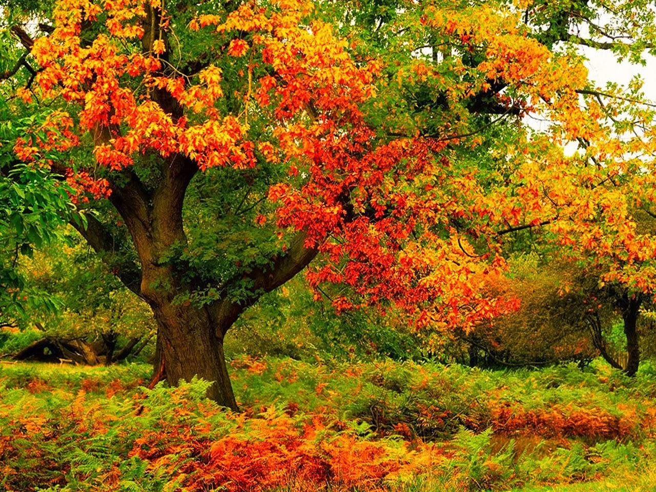 Wallpaper keep a green tree in your heart perhaps a - Colorful nature pics ...