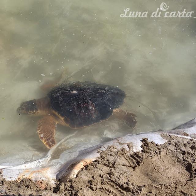 studiare le tartarughe e bambini