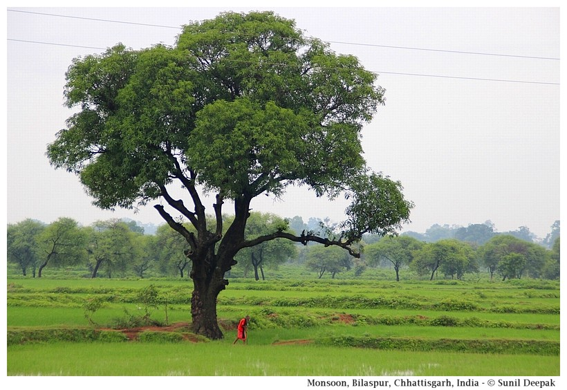 Monsoon in Bilaspur, Chhattisgarh, India - Images by Sunil Deepak