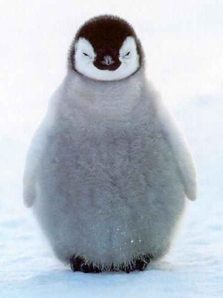 penguin - photo #25