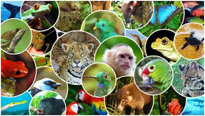 Conservación de la Fauna
