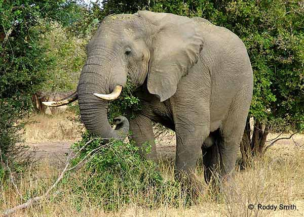 Rules Of The Jungle Facts About The Asian Elephant-8566