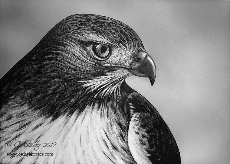 03-Bird-of-Prey-Cathy-Sheeter-Wildlife-Scratchboard-Drawings-www-designstack-co