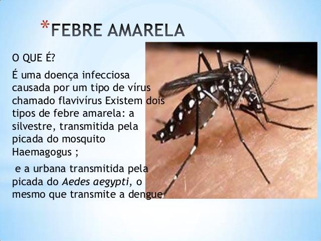 SP alerta sobre vacinação contra a febre amarela antes do Carnaval