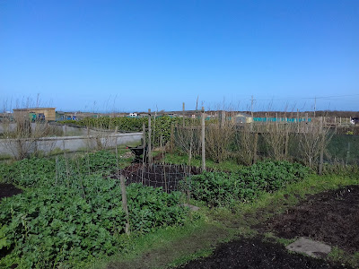 St Ives Cornwall Allotment - March Sunshine