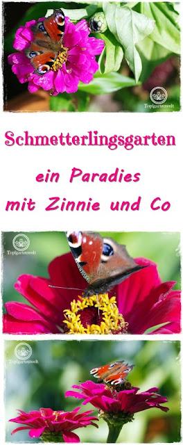 Gartenblog Topfgartenwelt Schmetterlingsgarten: Ein Paradies für Schmetterlinge im Garten schaffen mit ausgewählten Pflanzen, wie z.B. Zinnie oder Schmetterlingsflieder #schmetterlingsgarten #garten #schmetterlinge #tagpfauenauge #pflanzen #zinnie #schmetterlingsflieder