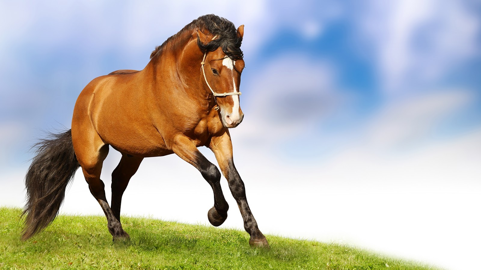 Wallpapers World: Horse Wallpapers Free Download For