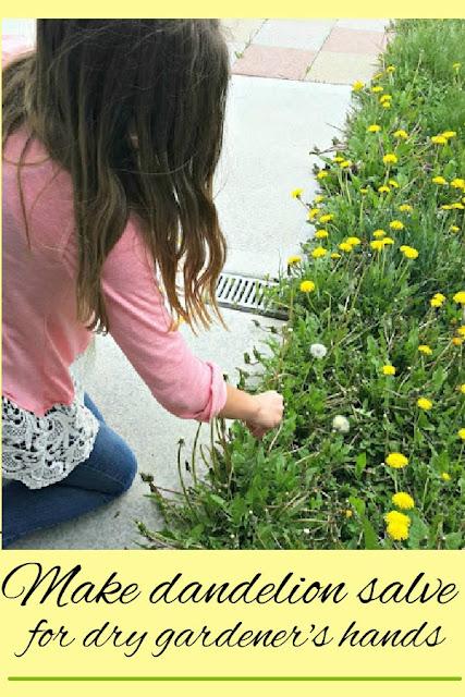 A step-by-step guide to make dandelion salve.