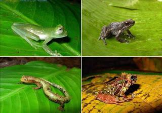 Todo sobre los Anfibios - Toda la información