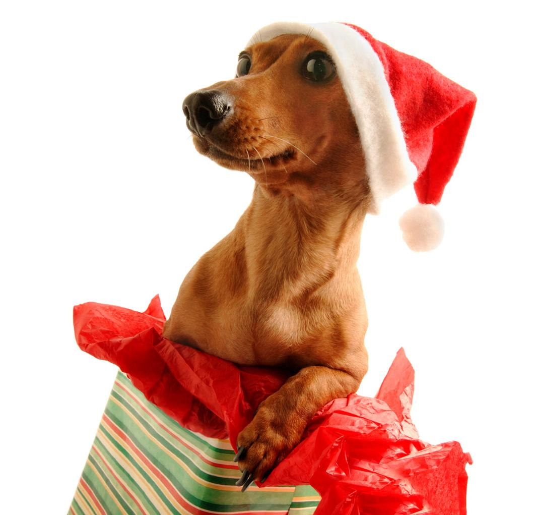Puppy Christmas Wallpapers - Wallpaper Cave  |Cute Christmas Dog