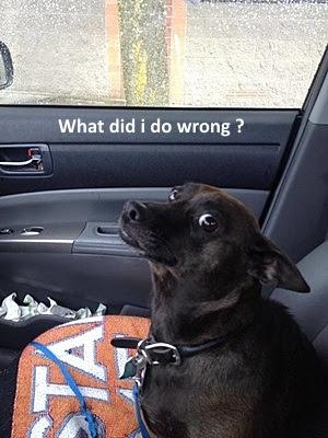 funny dog lokking
